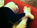 Domino bei seiner Lieblingsbeschäftigung
