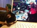 Domino liebt Kochsendungen!