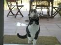 Domino und Julius fordern ihr Futter ein.