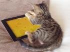 Erst mal Mäuse fangen. Mangels realer Nager eben auf dem iPad.