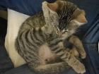 Katze wird katzig.
