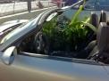 Green Car mal anders.