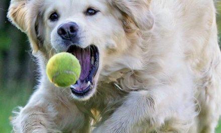 Frauenfussball.